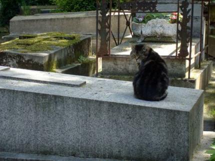 cimetière de Montmartre. Photo Alina Reyes